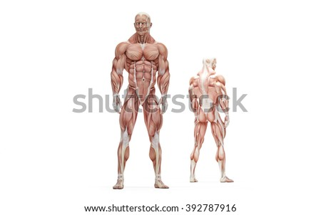 Posing athlete. Anatomical illustration. Isolated over white. Contains clipping path
