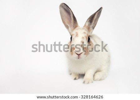 Positive little babby bunny on a white background - stock photo