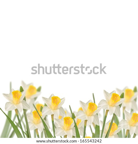 Postcard with fresh flowers daffodils  and place for your text. Abstract background for design. Spring background. Floral background.