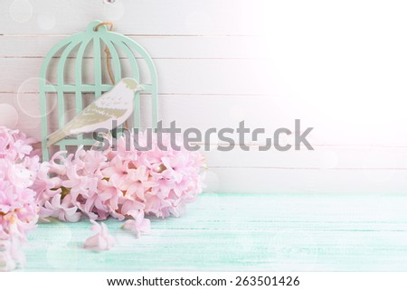 Postcard with fresh flowers hyacinths  and bird in ray of light on turquoise painted wooden planks against white wooden wall. Selective focus. - stock photo