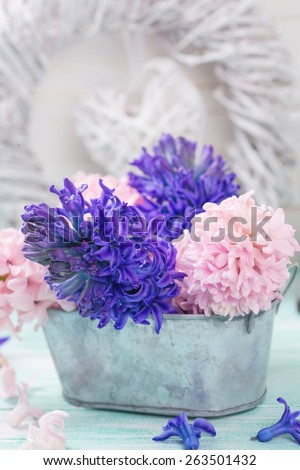 Postcard with fresh flowers hyacinths  and decorative  pink heart on turquoise painted wooden planks. Selective focus. Place for text.  - stock photo