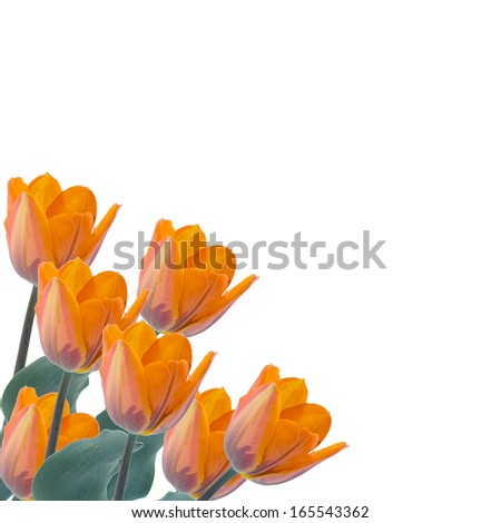 Postcard with fresh flowers tulips and empty place for text. Abstract background for design.