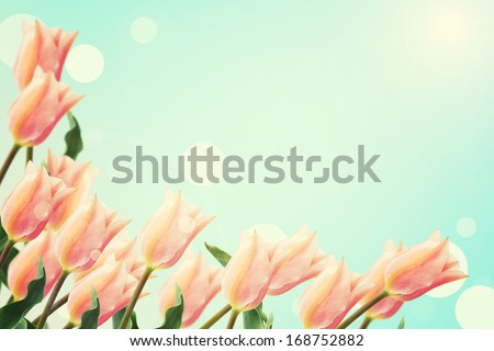Postcard with fresh flowers  tulips and place for your text. Abstract background for design. Spring background. Floral background. - stock photo