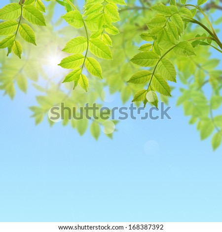 Postcard with fresh green leaves and place for your text. Spring background. Abstract background for your design.