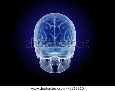 Posterior View of Skull with Transparent Brain - stock photo