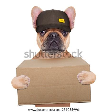 postman  french bulldog holding a shipping box , isolated on white background - stock photo