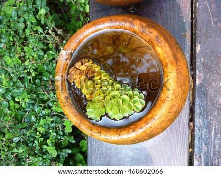 Pot of water plant on wood board in the garden, aerial view.