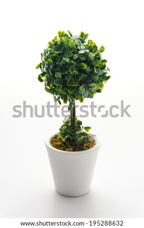 Pot plant isolated on white