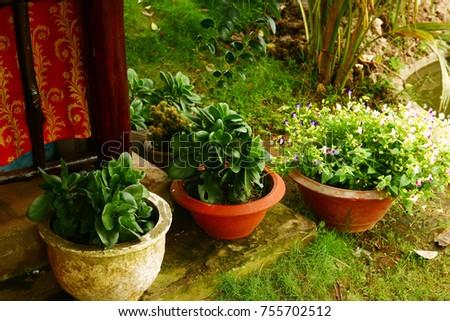 Pot Plants In Tropical Asian Garden Close Up Photo
