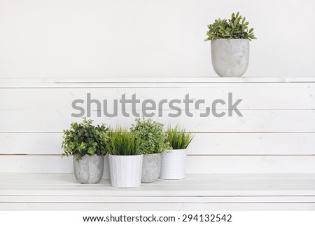 Pot plants in white pots and concrete on a background of white b - stock photo