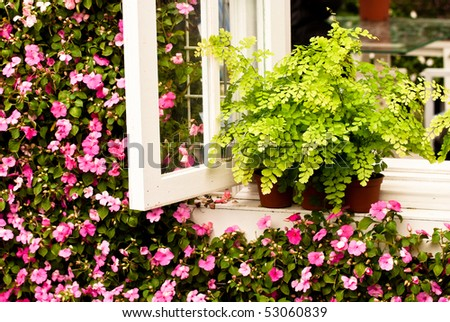 Pot with fern by the window and  flowers wall - stock photo