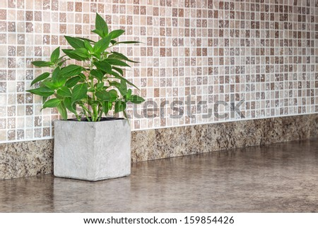 Pot with green mint on kitchen countertop. - stock photo