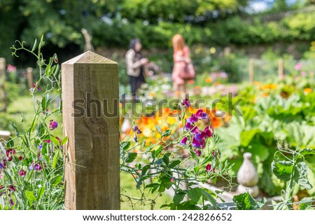 potager garden - stock photo