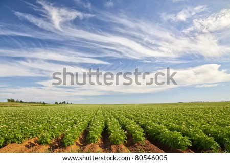 Potato Field in rural Prince Edward Island, Canada - stock photo
