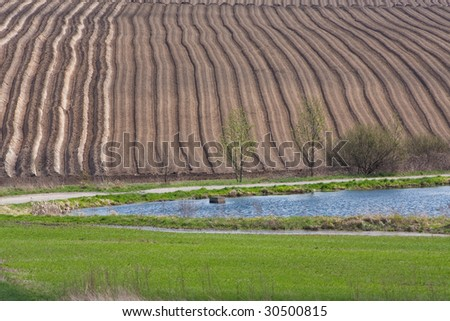 potato field in the springtime - stock photo