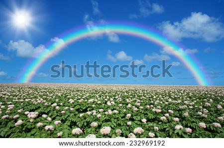 Potato field with sky and rainbow - stock photo