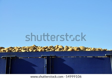 Potato packing plant: Potatoes hauled from farms on truck waiting to unload - stock photo