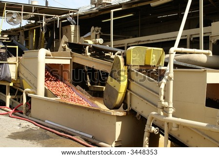 Potatoes are washed on a conveyor in a packing plant