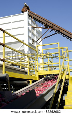 Potatoes at a packing plant are washed, then transported by conveyor into a hopper for loading onto trucks - stock photo