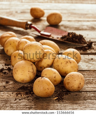 Potatoes, spade and soil on an old vintage planked wood table. Autumn harvest - rustic style image. - stock photo