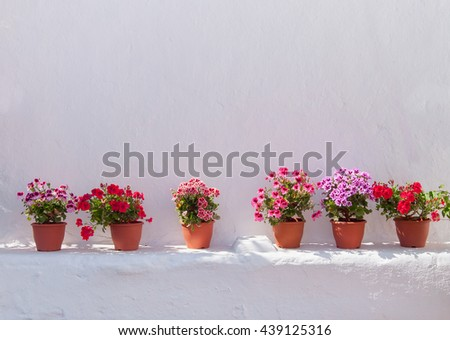 pots of flowers at a white wall of the village... - stock photo