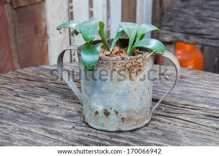 Pots with flowers/garden/plan ting - stock photo