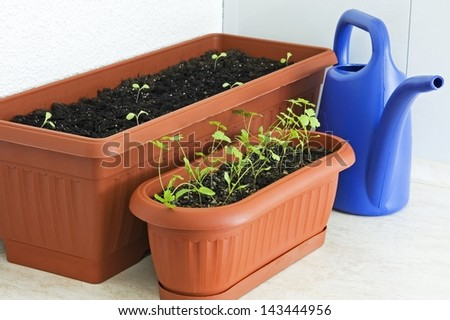 Pots with seedlings of parsley and sprouts of lettuce on balcony - stock photo