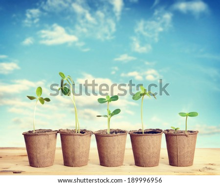 Pots with seedlings stand in a line against blue sky