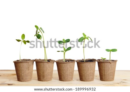 Pots with seedlings stand in a line isolated over white background - stock photo