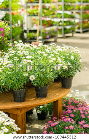 Potted flowers on table in garden center greenhouse store - stock photo