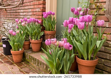 Potted Garden Potted garden spring easter tulips stock photo safe to use potted garden spring easter tulips workwithnaturefo