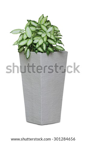 Potted house plant isolated in white background - Diffenbachia  - stock photo