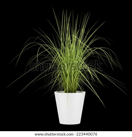 potted houseplant isolated on black background - stock photo