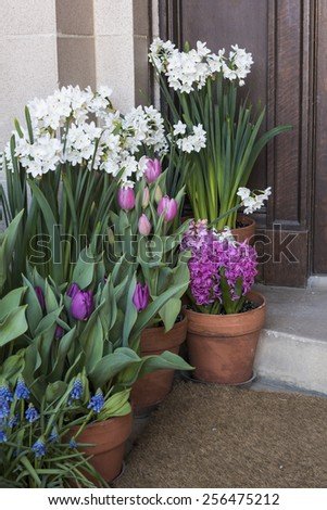 Potted Hyacinth and Tulips at Front Door Porch