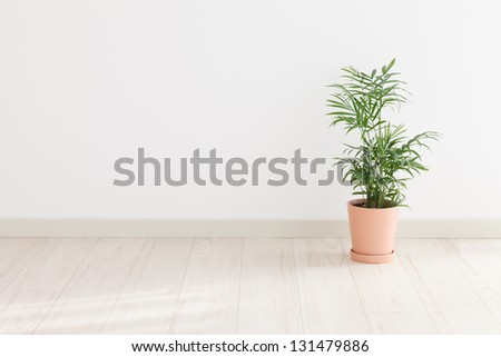 Potted Palm in the room