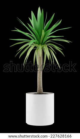 potted palm tree isolated on black background