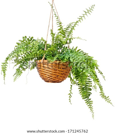 Fern Pictures Free Fern Royalty Free Stock