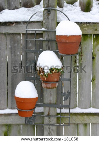 Potted plants in the snow. - stock photo
