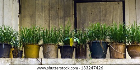 Potted plants on the porch