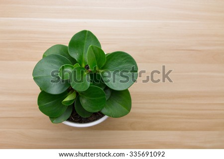 Potted plants on wooden desk - stock photo