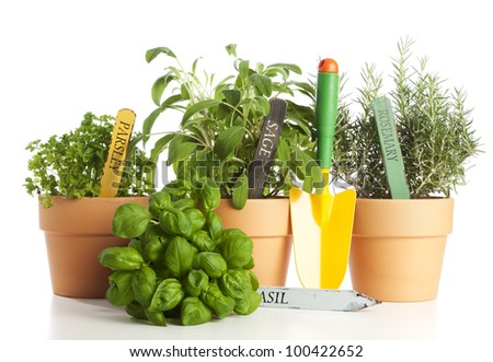 Potted Sage, Rosemary and Parsley, a Basil bush and a gardening shovel on white background