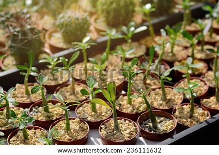 Potted seedlings growing a sunny day - stock photo