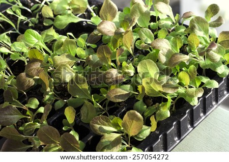 Potted seedlings growing in peat moss pots - stock photo