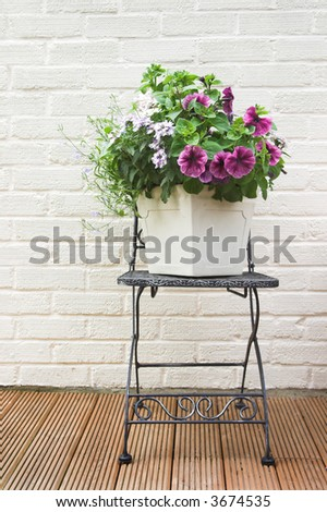 Potted Summer flowers - stock photo