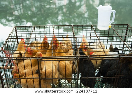 Poultry in cages - stock photo