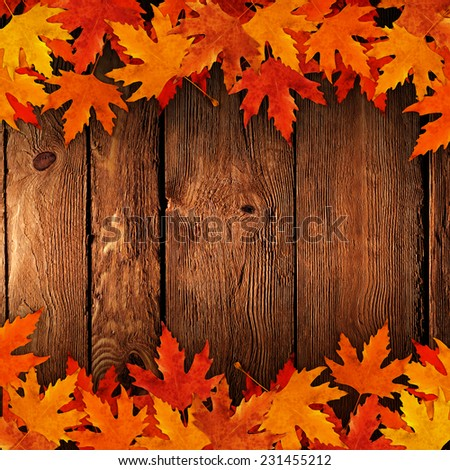 Poured onto dry leaves in autumn wood - stock photo