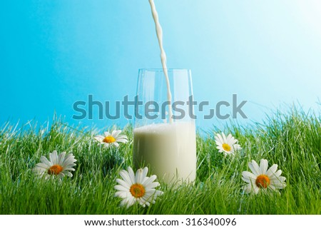 Pouring milk in a glass standing on flower field - stock photo