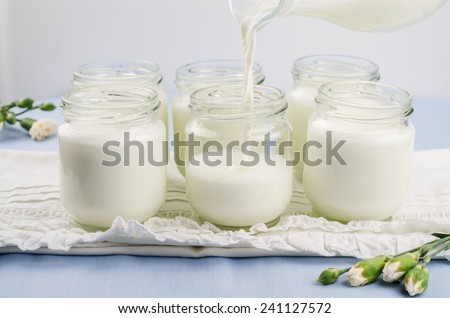Pouring milk in glasses jars for preparing yogurt at home