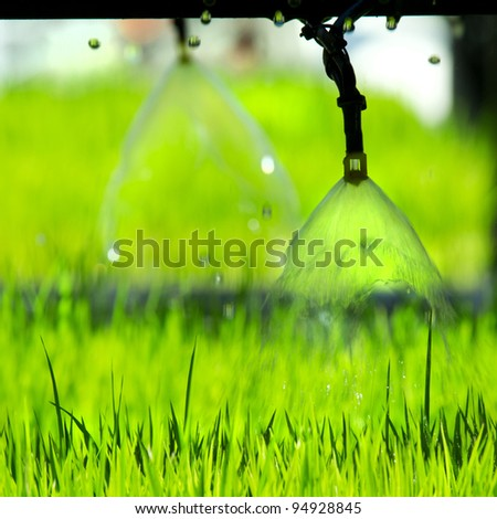 Pouring young plants from small Sprinkler spraying - stock photo