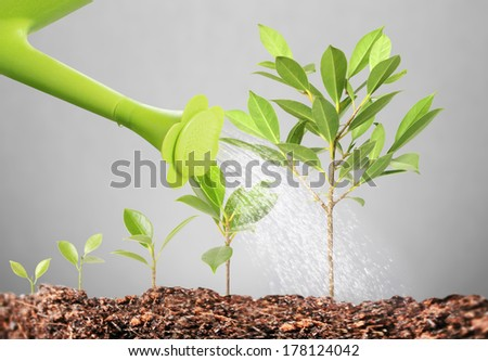 pours on seedling, watering young tree
